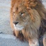 群馬サファリパークはマイカーで見られる100種1000頭羽の動物園!【群馬】おすすめスポット