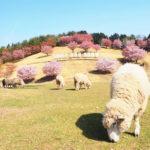 伊香保グリーン牧場は動物たちと触れ合える隠れた桜の名所!【群馬】おすすめスポット