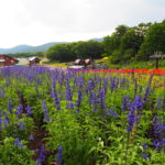 たんばらラベンダーパークは関東最大のラベンダー畑がある絶好の避暑地!【群馬】おすすめスポット