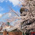 華蔵寺公園 花まつりに桜を見に行ってきました!【群馬】おすすめイベント