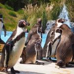 こども動物自然公園は動物とのふれあいがメインの体験型動物園!【埼玉】おすすめスポット