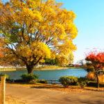三ツ寺公園はイオン高崎も近い、湖でボートに乗れる自然豊かな公園!【群馬】おすすめスポット
