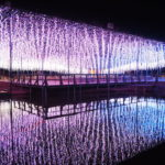 あしかがフラワーパークで見る冬季限定の幻想的なイルミネーション!【栃木】おすすめスポット