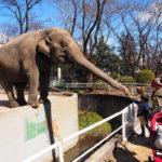 宇都宮動物園は大型動物ともふれあえる地域密着型のレトロな動物園!【栃木】おすすめスポット