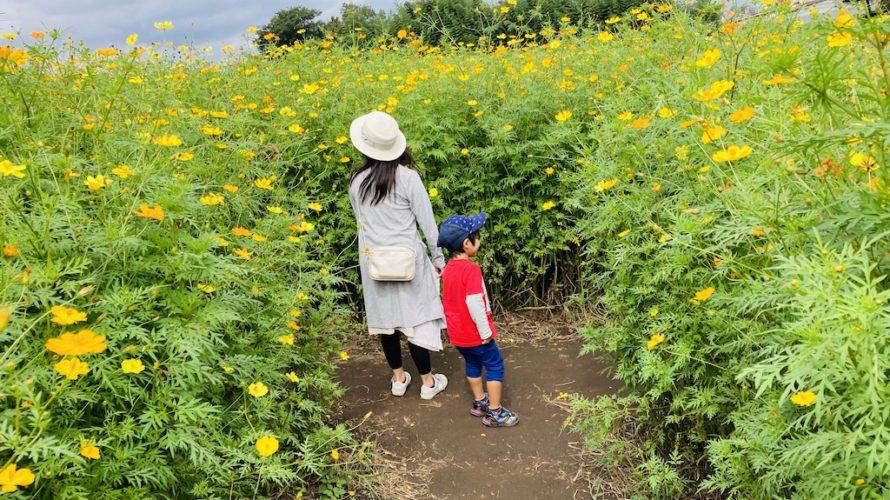 鼻高展望花の丘はコスモスや菜の花など四季折々の花が楽しめるスポット!【群馬】おすすめスポット