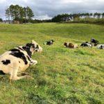 浅間牧場と浅間牧場茶屋は動物と触れあえる浅間山の大自然スポット!【群馬】おすすめスポット
