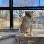 桐生が岡動物園はライオンやキリンもいて水族館もある無料の動物園!【群馬】おすすめスポット